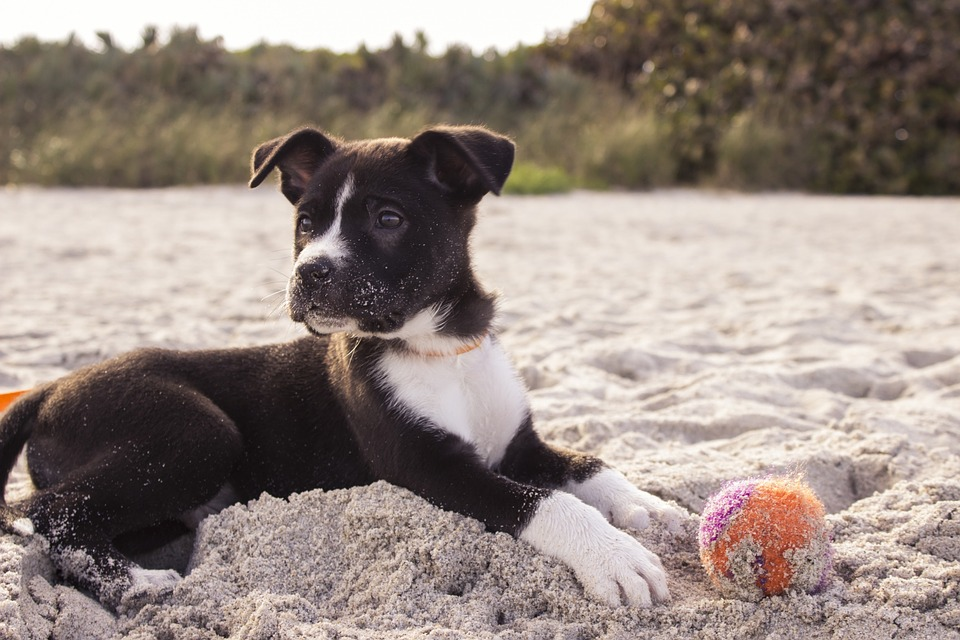 Inaugurata Unica Beach, la spiaggia per animali.