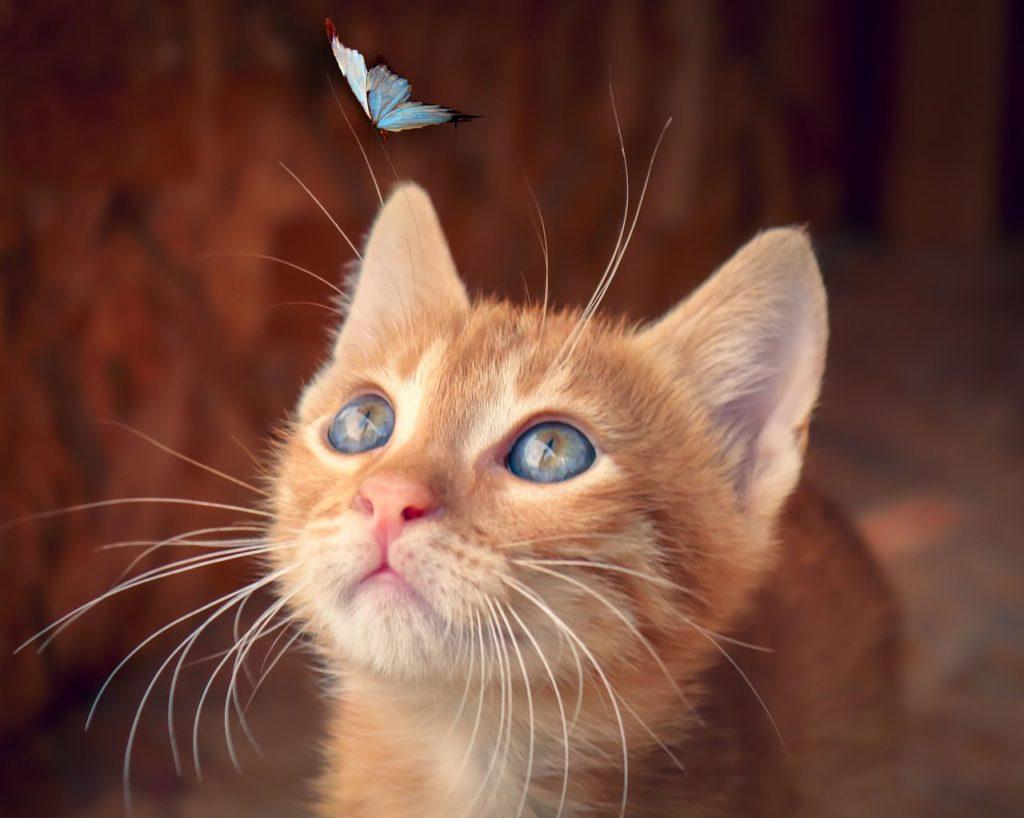 gatto, cat, consigli, educazione