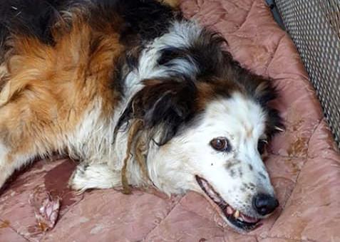 Addio Contessa, il cane di quartiere che viveva in via Gran Sasso.