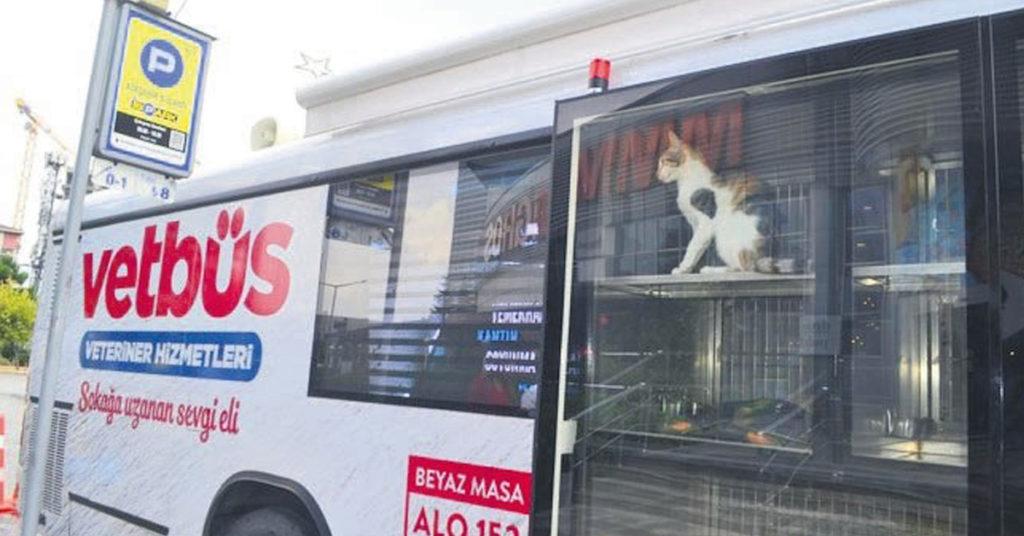 instanbul, veterinari, cura, cani, gatti