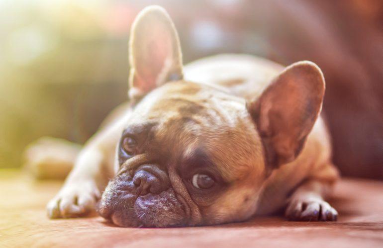 Afa e caldo, i consigli del veterinario