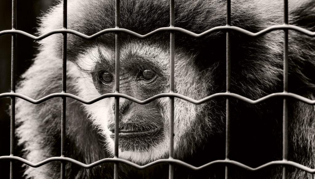 Pene per chi uccide o maltratta un animale