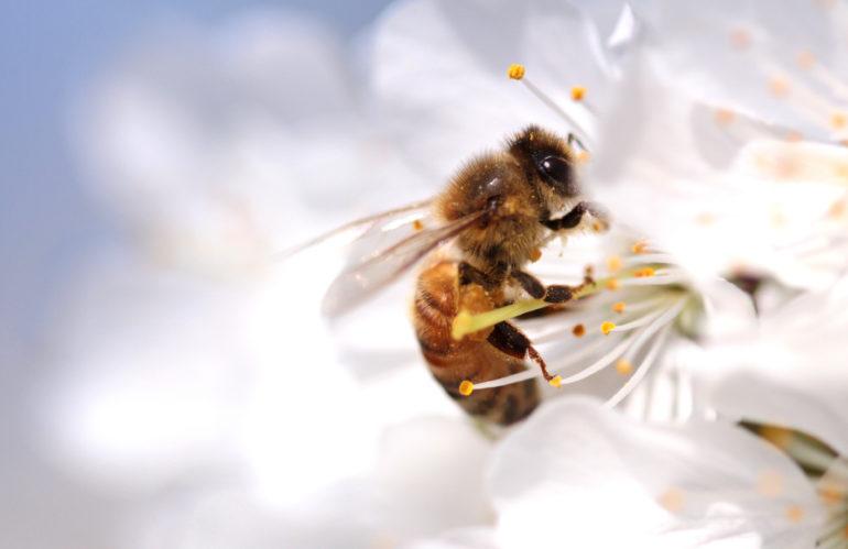 La vita correlata alle api: allarme estinzione lanciato dall'Unione Europea