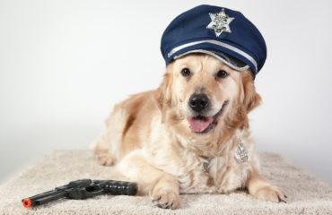 arrivano i cani poliziotto
