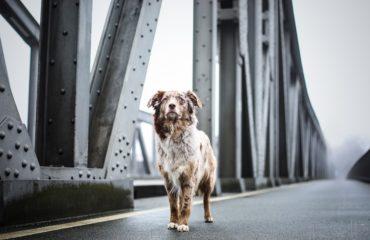 cane abbandonato