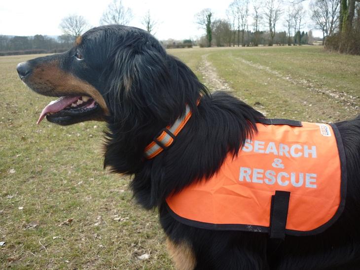 Presentazione corso per cani molecolari- ricerca persone scomparse