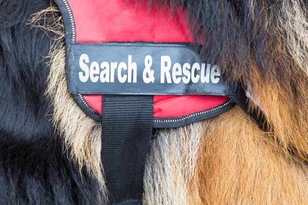 search rescue ricerca salvataggio abruzzo isernia cinofile