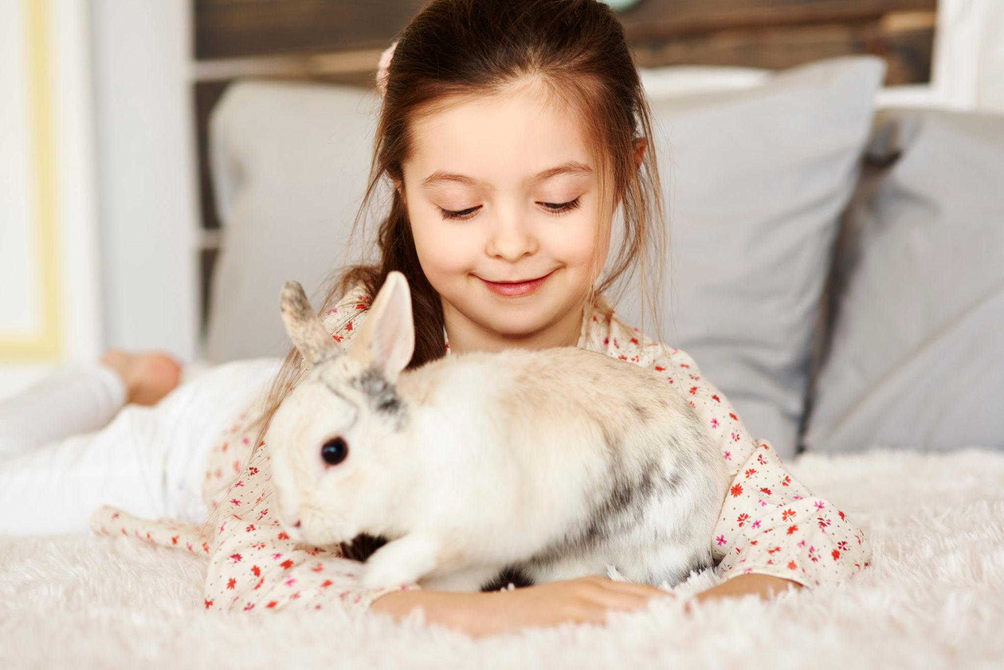 Il Coniglio: 1 perfetto animale da compagnia