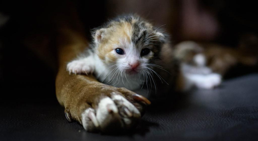 Cagnolina randagia salva cinque gattini. Canada