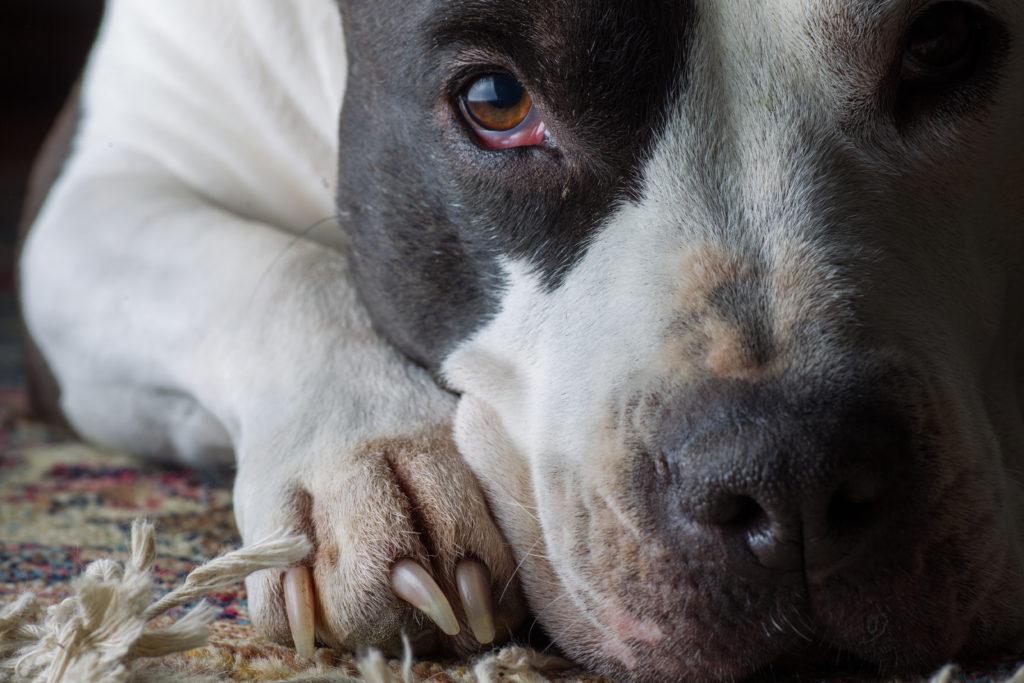 Montesilvano, sevizia tre cani procurandone la morte di uno: denunciato