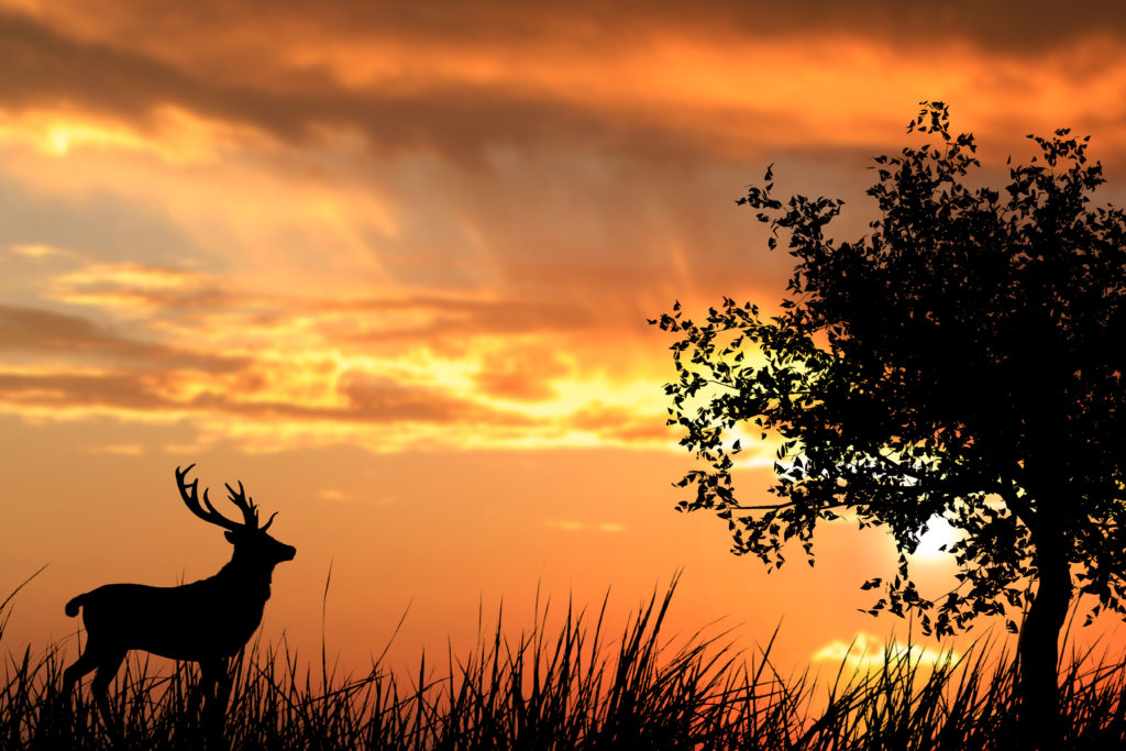 Fauna selvatica, cosa fare incontriamo un animale