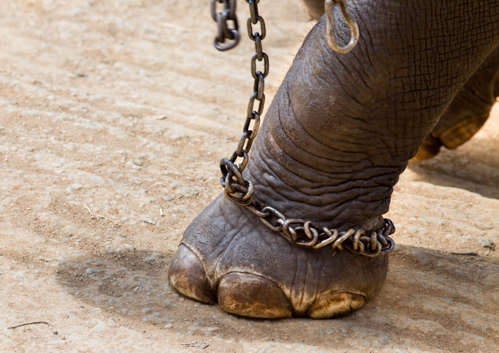 Campania: stop agli animali dei circhi