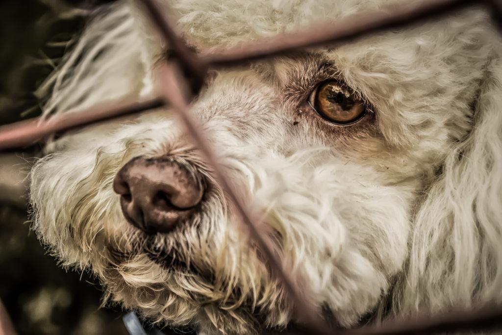 San Vito Chietino, sequestrato canile lager con 60 cuccioli, denunciata un'intera famiglia