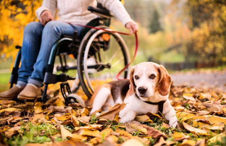 Cure veterinarie, No del Governo a riduzione Iva e agevolazioni fiscali
