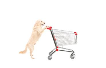disegno di legge che consente accesso animali nei luoghi pubblici