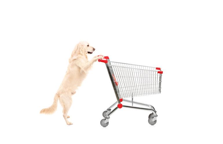 Consentito l'accesso nei luoghi pubblici agli animali domestici: ecco il disegno di legge