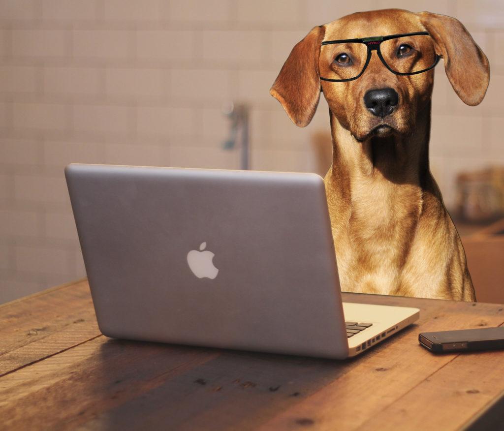 corso per patentino proprietari di cani comune di Chieti 2020