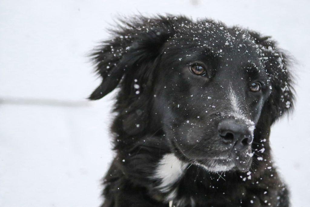 consigli utili per proteggere gli  animali in inverno.