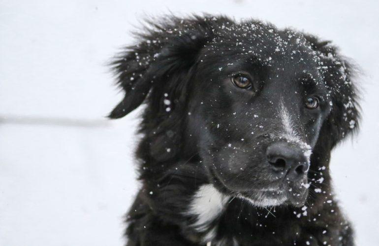10 consigli per proteggere gli  animali nei periodi più gelidi dell'anno
