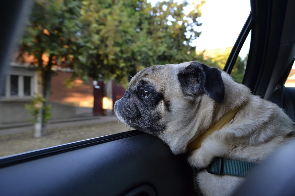 Lynn la senzatetto che viveva in  auto per non separarsi dai suoi cani.