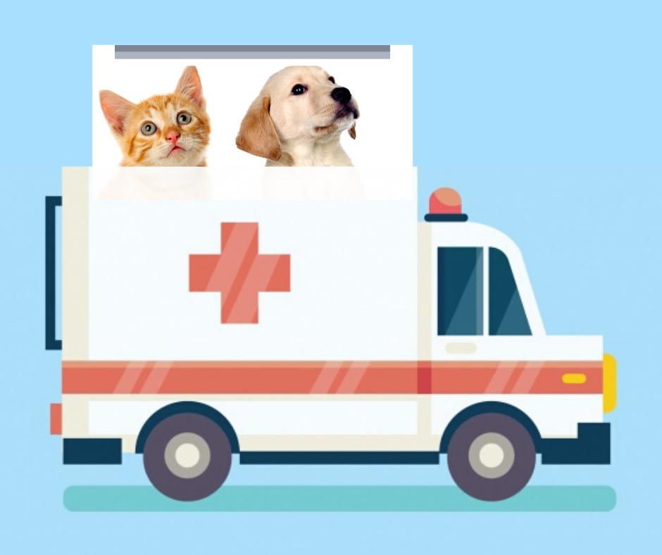 Ferrara, nasce il primo soccorso per  animali