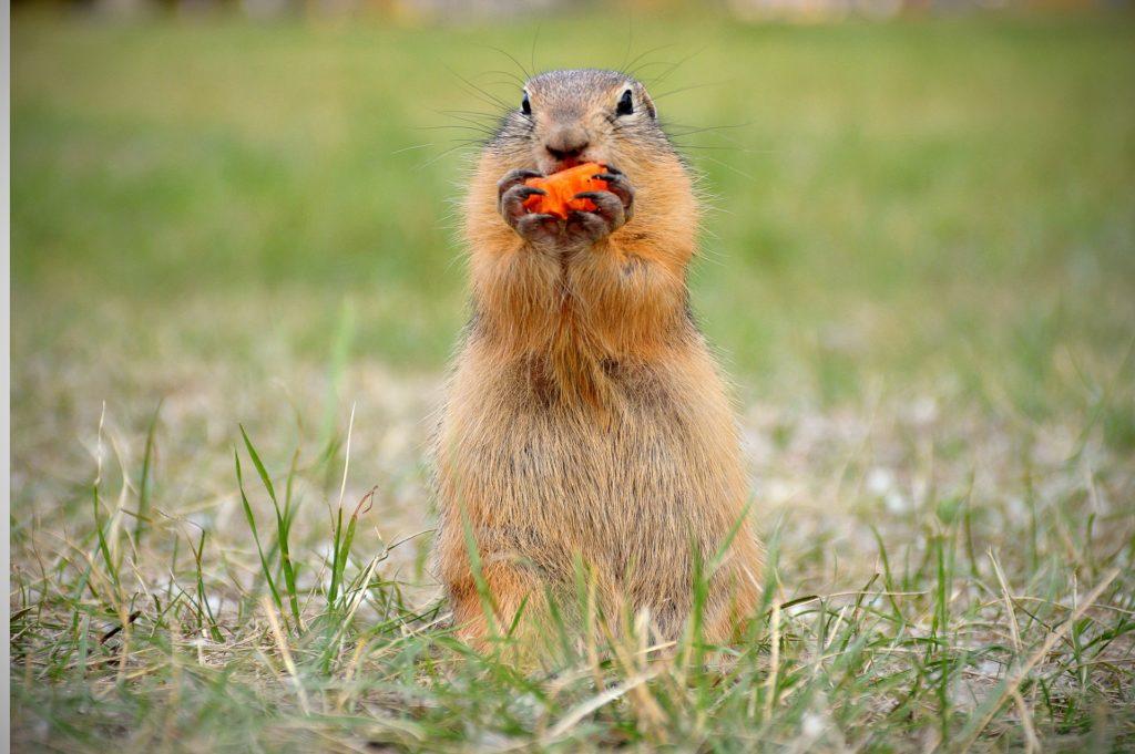 2 febbraio, il giorno della marmotta