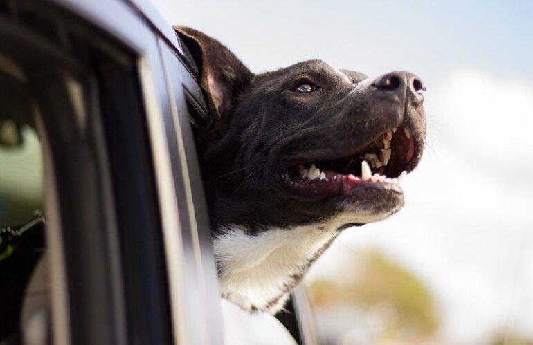 MAI LASCIARE GLI ANIMALI IN AUTO AL SOLE, 15 MINUTI POSSONO ESSERE LETALI