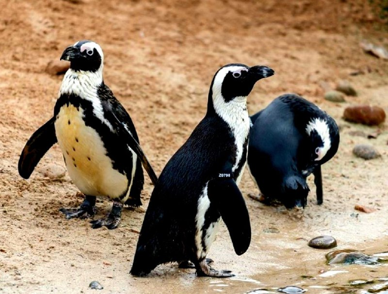 Lo zoo Living Coasts chiude i battenti