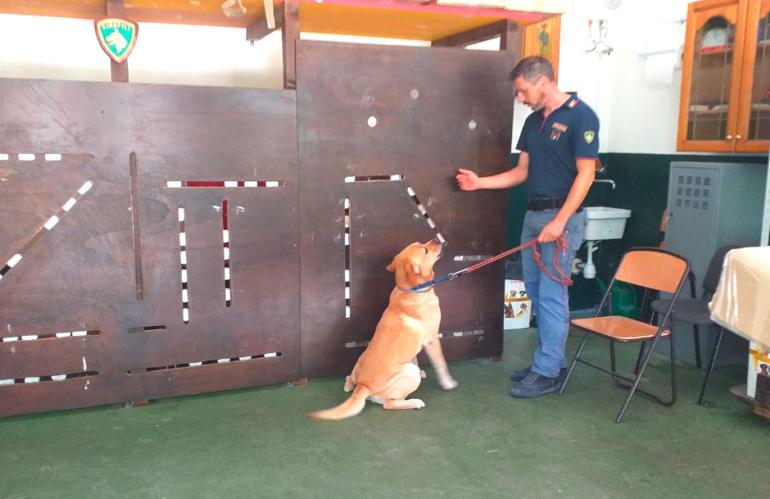 Cani  al servizio della collettività: l'unità cinofila della Questura di Pescara