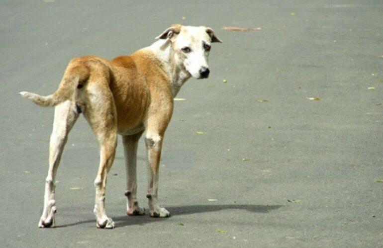 Trovare un cane abbandonato, cosa dice la legge e cosa fare