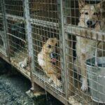 Imprigionare cani per soldi, canili lager e libertà negate