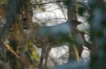 In Abruzzo i cittadini possono chiedere il divieto di caccia sui terreni di loro proprietà