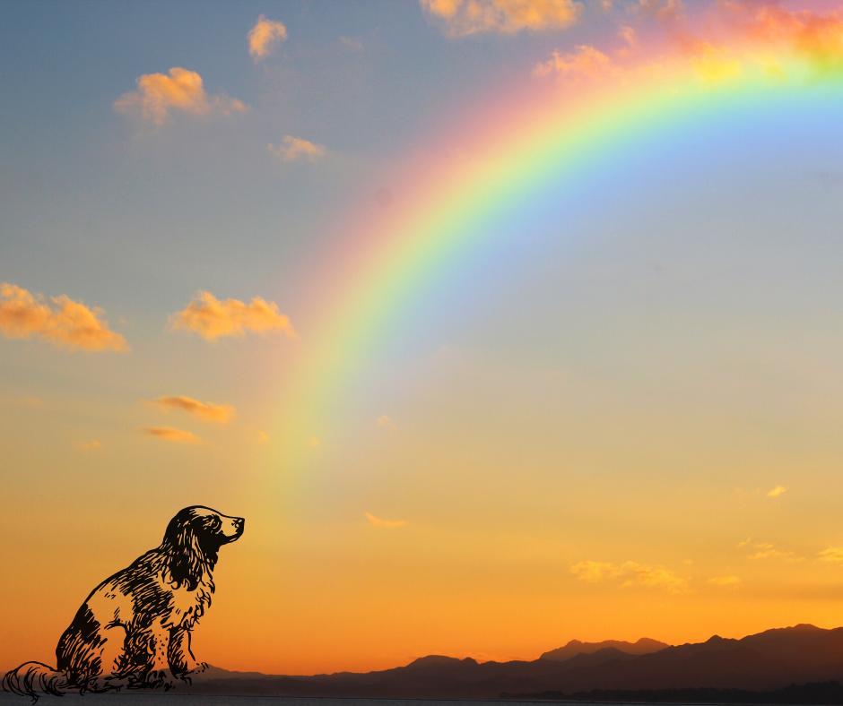 Orrore a Montesilvano: due cuccioli di cane barbaramente uccisi