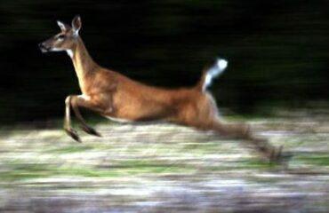 Incidenti stradali con animali coinvolti: Abruzzo sul triste podio