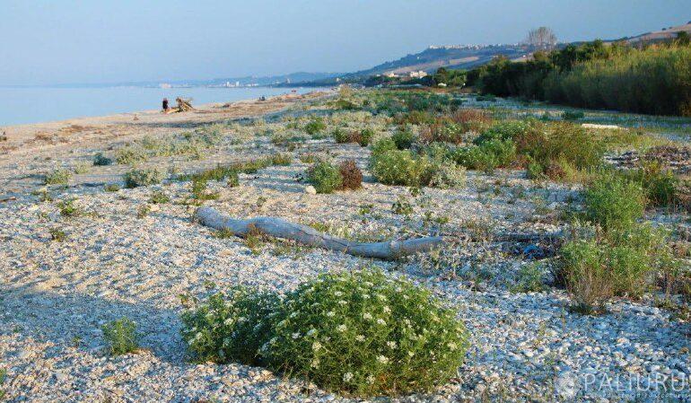 Attacco alla costa a Pineto: in arrivo gigante colata di cemento vista mare su 40 ettari vergini