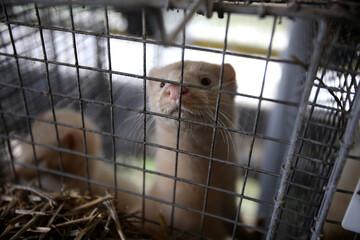 Stop agli allevamenti degli animali da pelliccia per il 2021:il governo proroga la chiusura