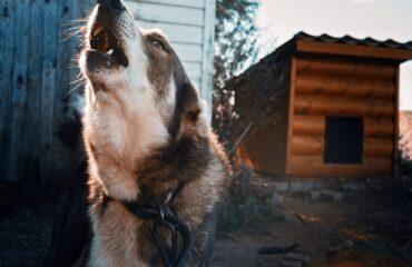 AAA cercasi soluzioni antiabbaio dei cani