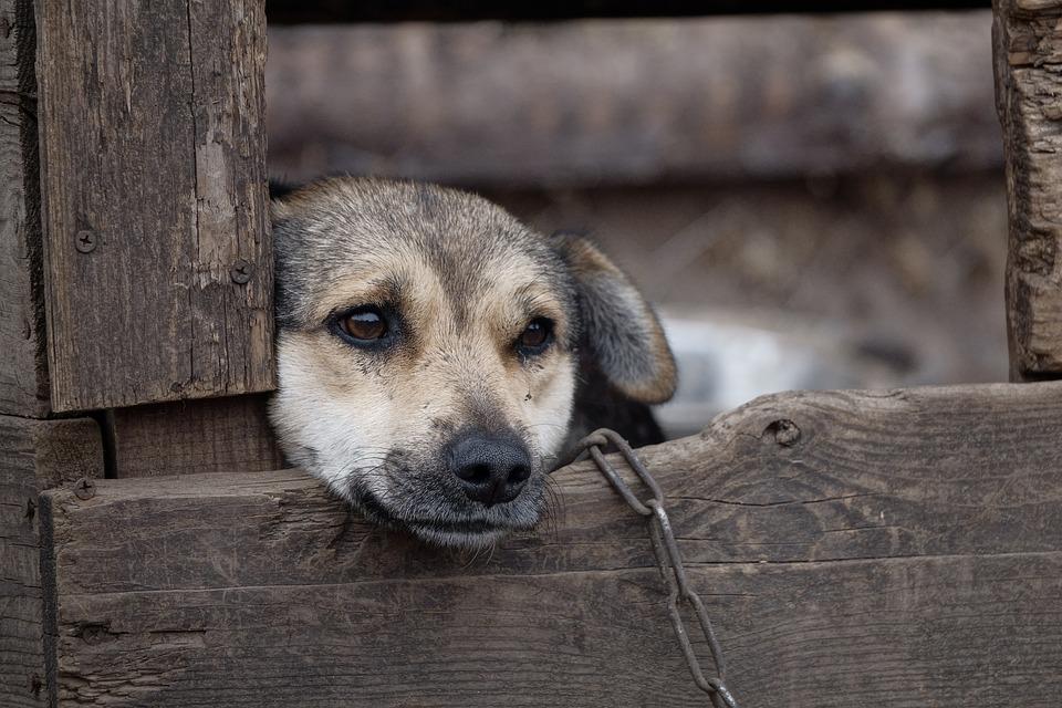 AAA cercasi soluzioni anti abbaio dei cani