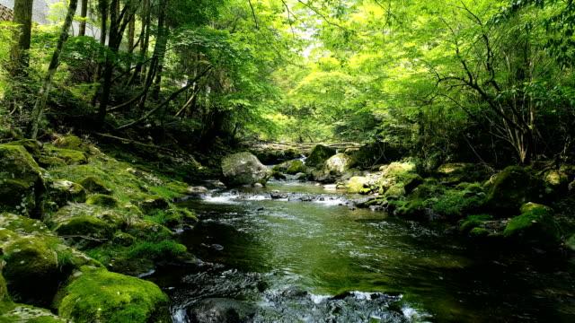 Natura da vivere: Festa delle Oasi Wwf abruzzesi con eventi e visite per tutte le età