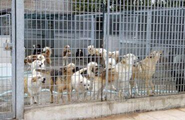Maltrattamento animali: sequestrato canile a Manoppello