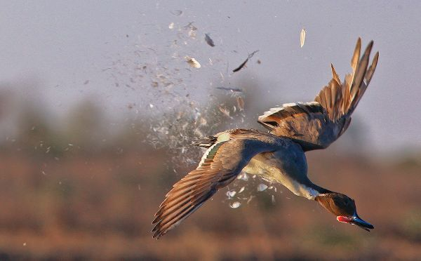 l Tar accoglie ricorso ambientalisti, stop alla caccia fino all'8 settembre