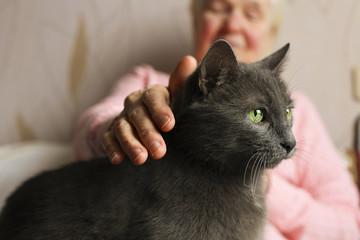 Un pronto soccorso veterinario pubblico per tutti: ancora pura utopia