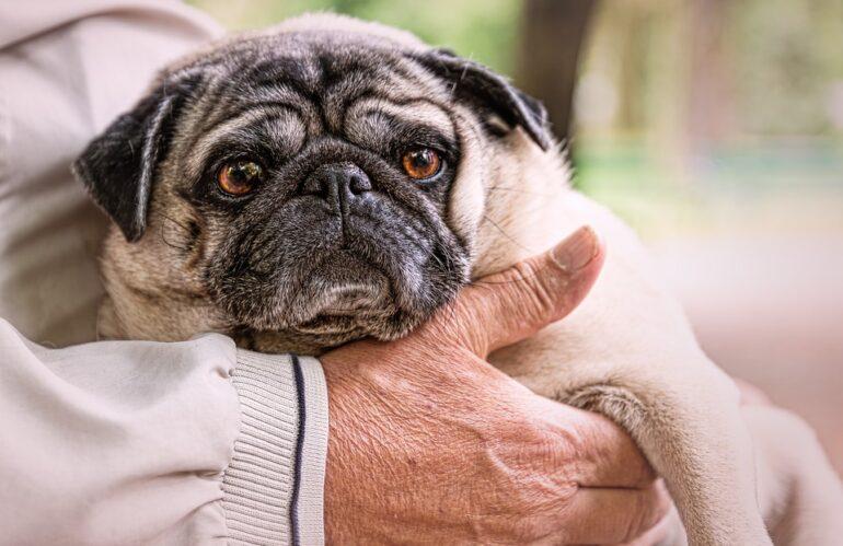 Un pronto soccorso veterinario pubblico per tutti: nel 2021 è ancora utopia