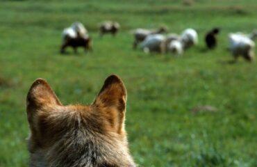 Elogi europei per la Majella come scuola di convivenza con il lupo
